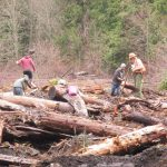 Bark volunteers tree planting obliterated, decommissioned road on USFS land with trees and funding from Stewardship Retained Receipts in 2015